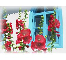 Colors of the rural old home Photographic Print