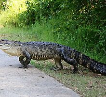 Gator Crossing by Paulette1021