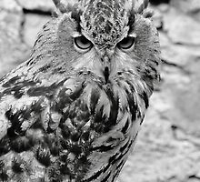 Eagle Owl by Paul Bettison