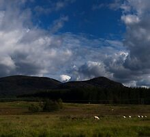 Scottish Sheep Farm, Mountains and Clouds - View LARGE by Glen Allen