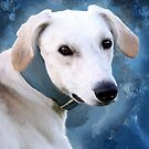 Lurcher - Ty by Sarahbob