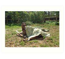 Natural horsemanship  4 Art Print