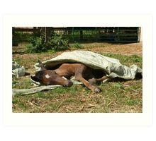 Natural horsemanship  5 Art Print