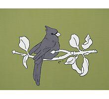 My Little Bird Photographic Print