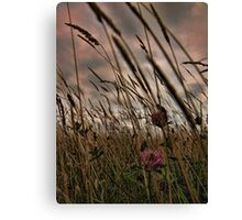 wind in the grass Canvas Print