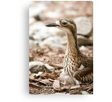 Invisible Curlew Canvas Print