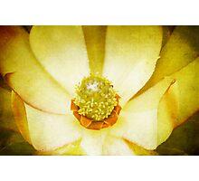 Winter Flower Photographic Print