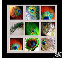 Peacock Blanket Photographic Print