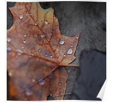Wet Fall Leaf on Stone Poster