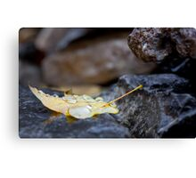 Weighed Down Canvas Print