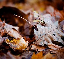 Pile of Leaves by John Hanam