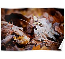 Pile of Leaves Poster