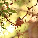 Nesting III by jbiller