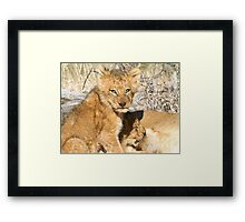 Lunch ! Have You Had Yours? Framed Print