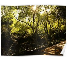 Summer Sun - Conservatory Garden - Central Park Poster