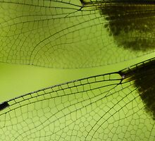 Dragonfly Wings by naturalnomad