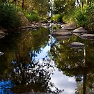 Reflections by the creek by Philip Alexander