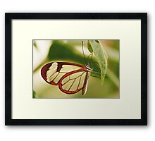 UP CLOSE & PERSONAL THE GLASSWINGED BUTTERFLY Framed Print