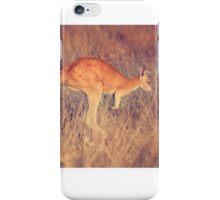 Red Kangaroo, Outback Western Australia iPhone Case/Skin