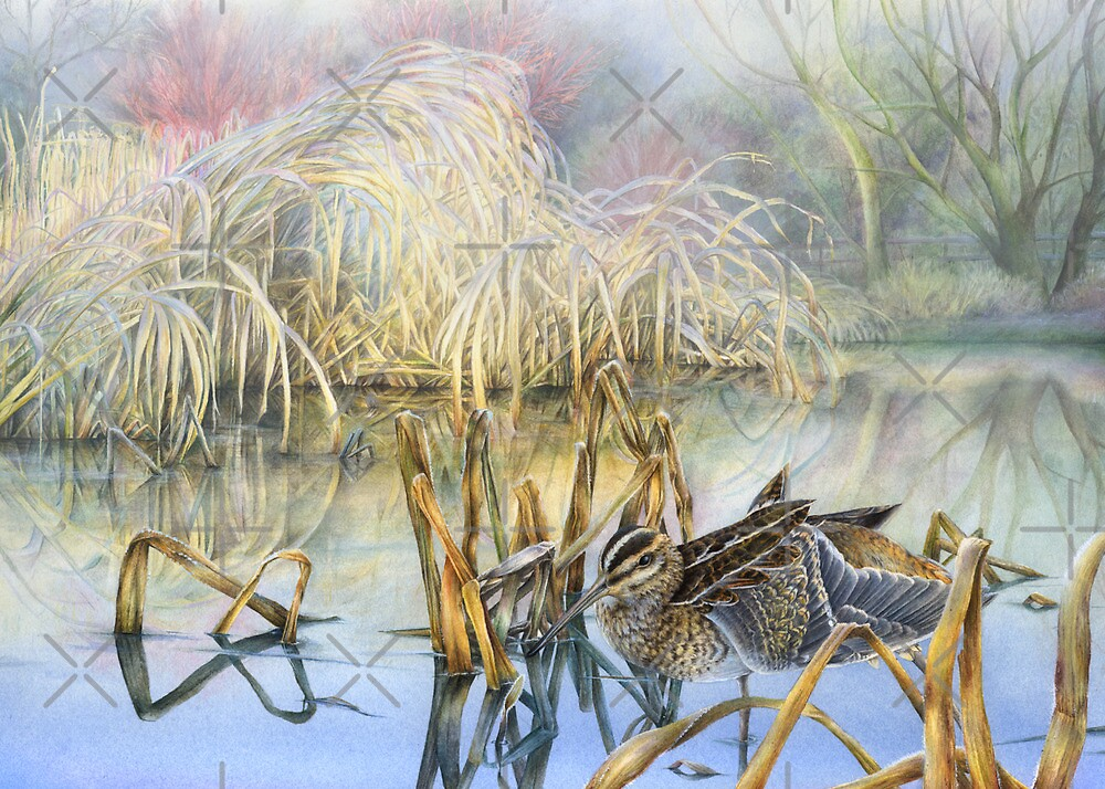 Snipe on a cold and frosty morning by Sarah Trett