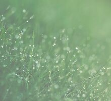 Morning dew by netza