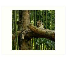 Cat in a Tree Art Print