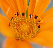 Summer Flower by Doug Cargill