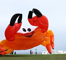Flying Crabs? by Harry Purves