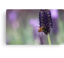 Bee on Lavender Canvas Print