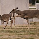 Deer Spanking at Fire Island by vicjauron