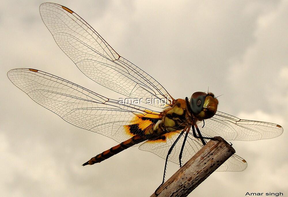 Dragon Fly by amar singh