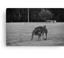 Eastern Grey Kangaroo (black and white) Canvas Print
