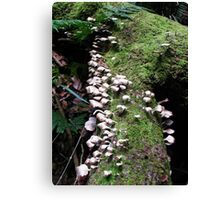 Fungi Forest Canvas Print
