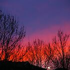 Bare Branches Salute The Dawn by David McMahon