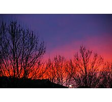 Bare Branches Salute The Dawn Photographic Print