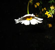 Illuminated Daisy by Tonee Christo