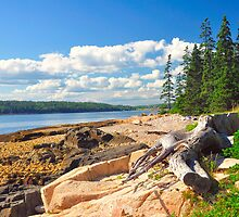 Driftwood, Acadia National Park, Schoodic Peninsula, Maine, United States by fauselr