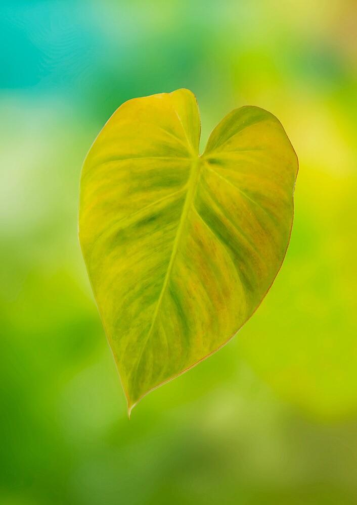 Hearts  by Jenny Dean