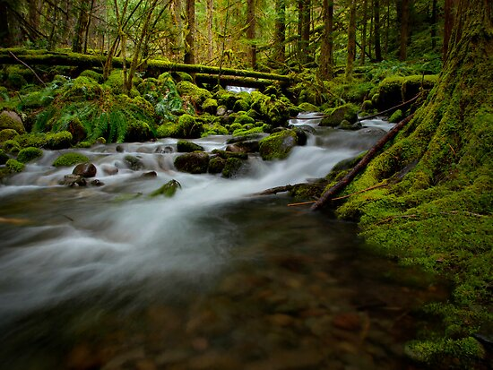 Pool Of Beauty by Charles & Patricia   Harkins ~ Picture Oregon