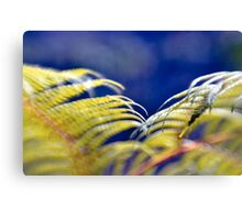 Tree fern Canvas Print