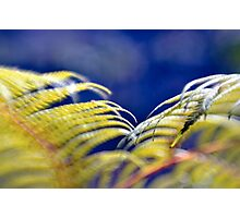 Tree fern Photographic Print