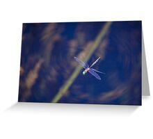 Dragon fly, in flight, Western Australia Greeting Card