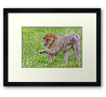Peace Offering to his Mate  Framed Print