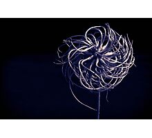 Monotone clematis - faded Photographic Print