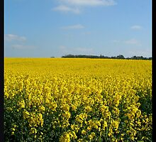 Fields of Gold by gm8ty