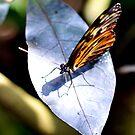 Leaf by vasu
