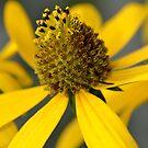 Yellow Petals by vasu