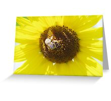 Working the flower for pollen Greeting Card