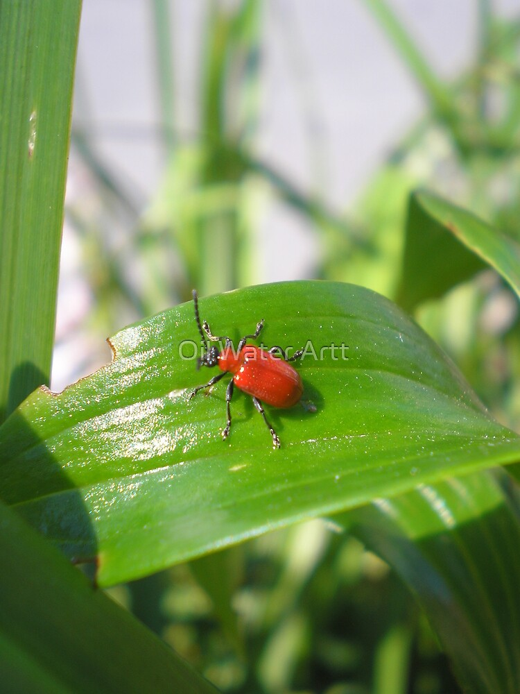 a bug's life by Oil Water Artt