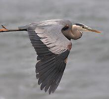 Fly away by Nicole Besch